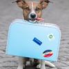 Backpack oder Luxuskoffer?   – Das passende Gepäck für die Flugreise